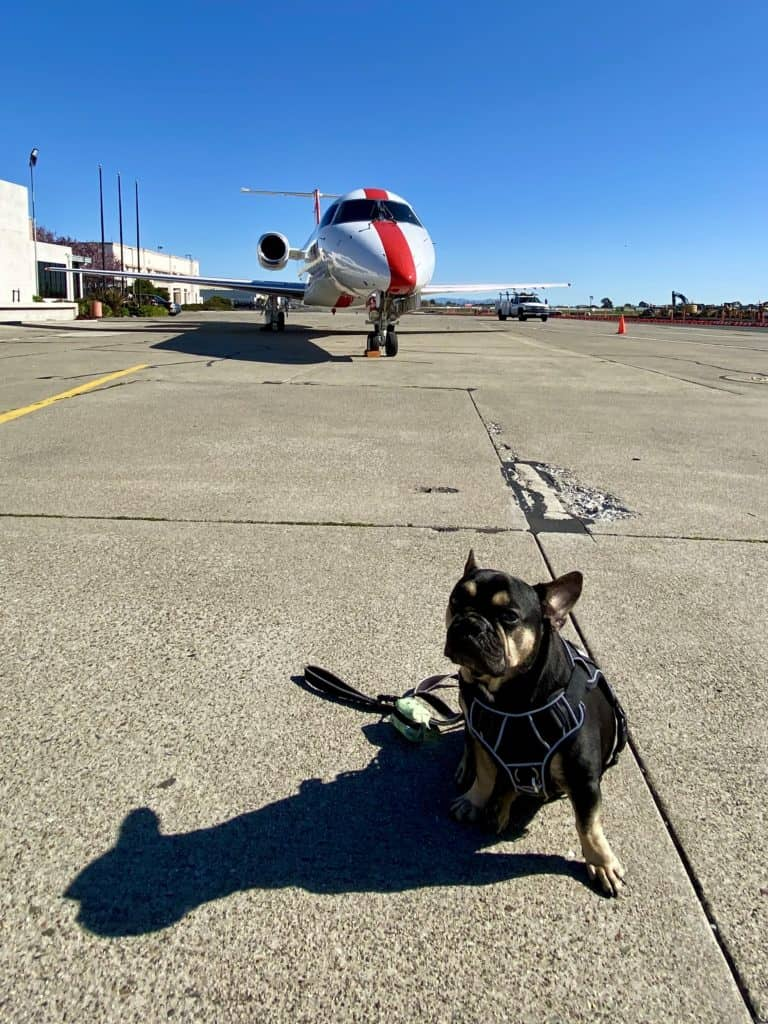 flying JSX with a dog