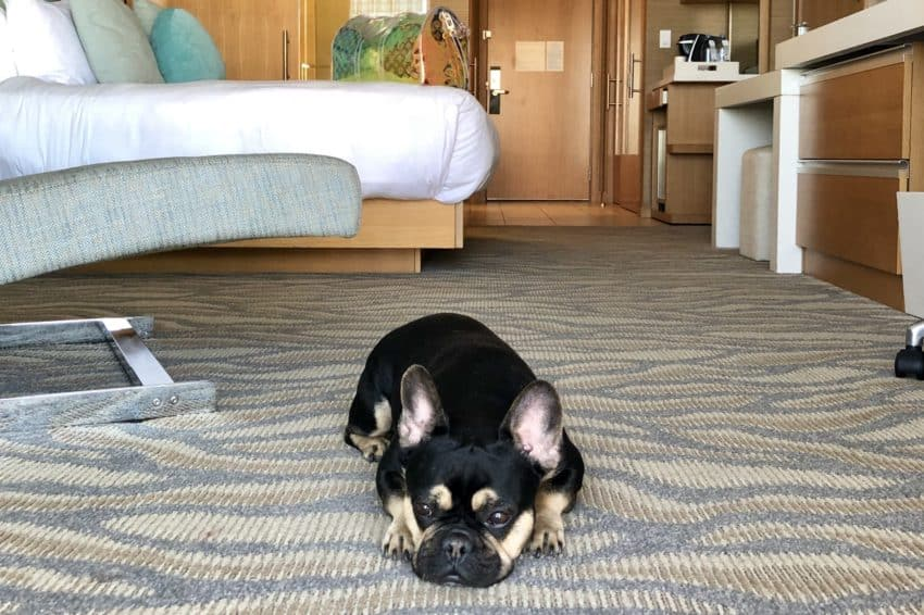Hotel chains suitable for dogs