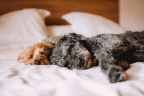 Hotel chains for pets