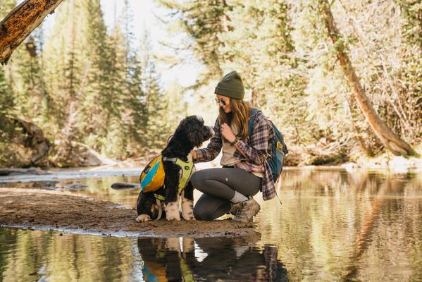 The ultimate guide to pet health and safety in tourism