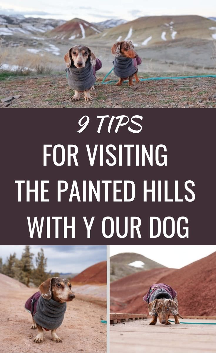 Tips for visiting Sick Hill National Monument with your dog