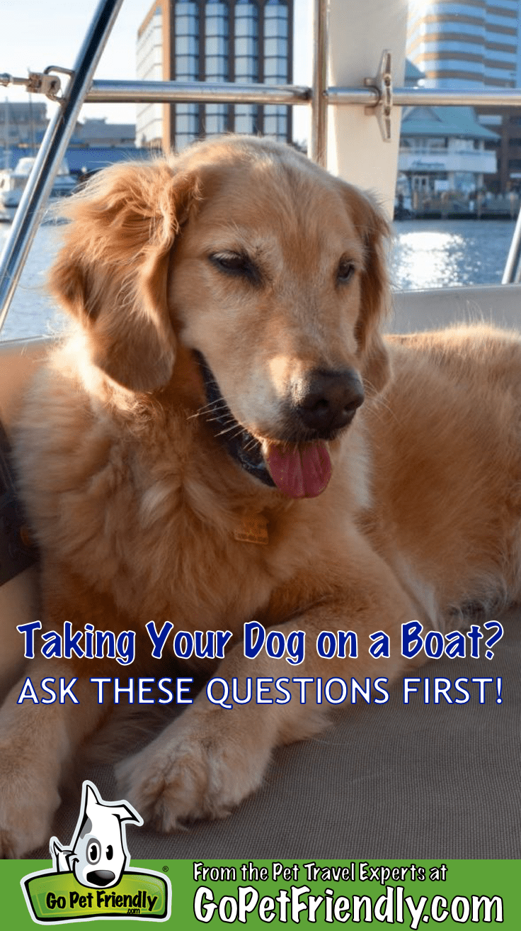 Take your dog on a boat?  Ask these 5 questions first  GoPetFriendly.com