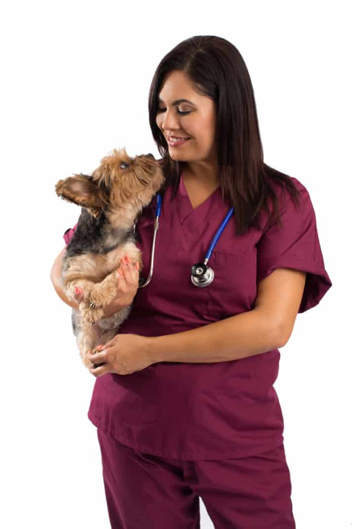 A small dog kept by a veterinarian