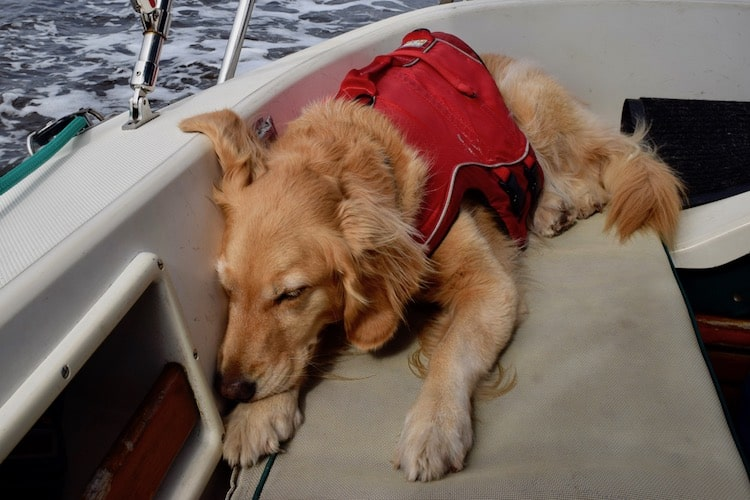 Honey, the boat dog is wearing a life jacket.