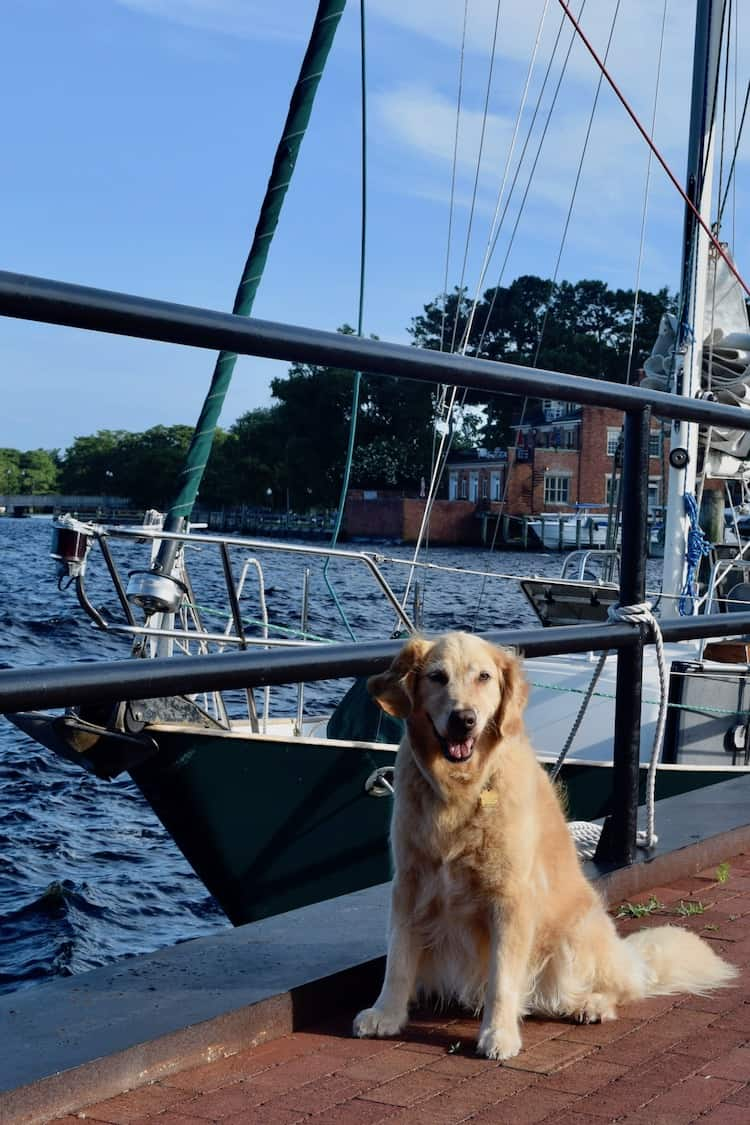 Dear boat dog in the ports of Elizabeth City with Meander.