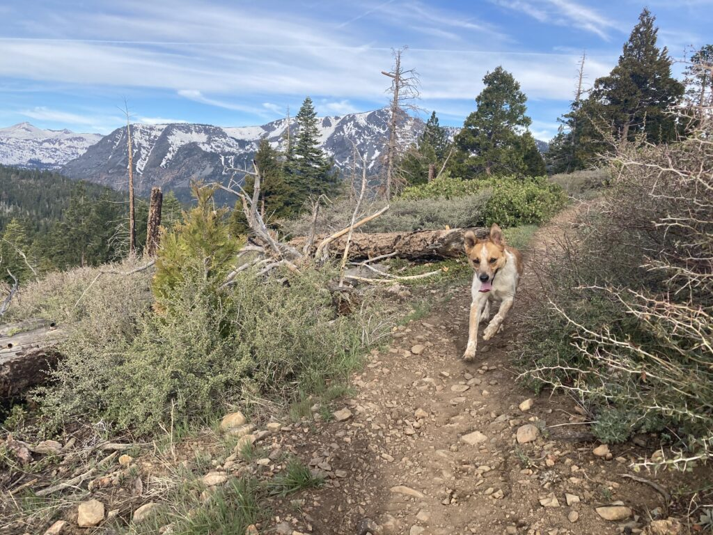 There are many great hiking and running trails near Basecamp Tahoe South.