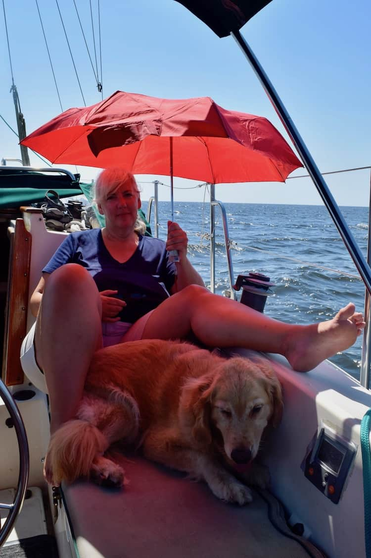 Golden retriever shaded by an umbrella in the cockpit.