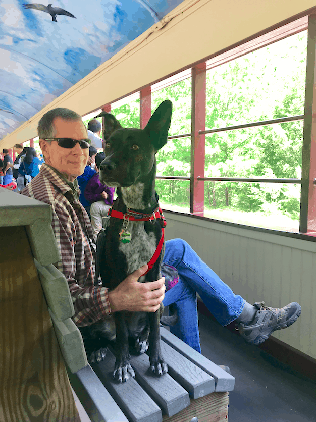 A tiger dog sitting next to a man on the scenic Lehigh Gorge Railroad in Jim Thorpe, Pennsylvania