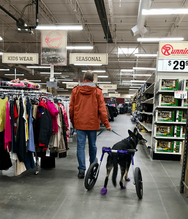 A man walking a dog in a wheelchair in a grocery store on the farm