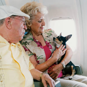 Taking your dog on airplanes