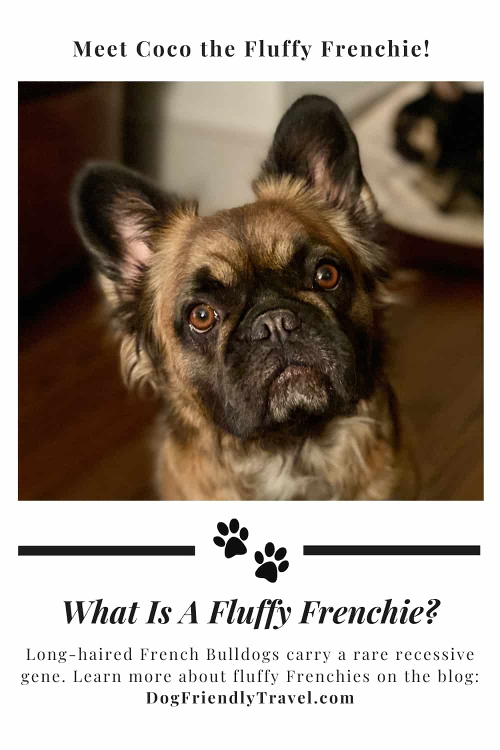 fluffy french pin