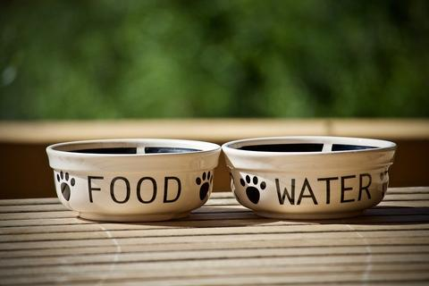 ecological bowl for dogs from ceramics