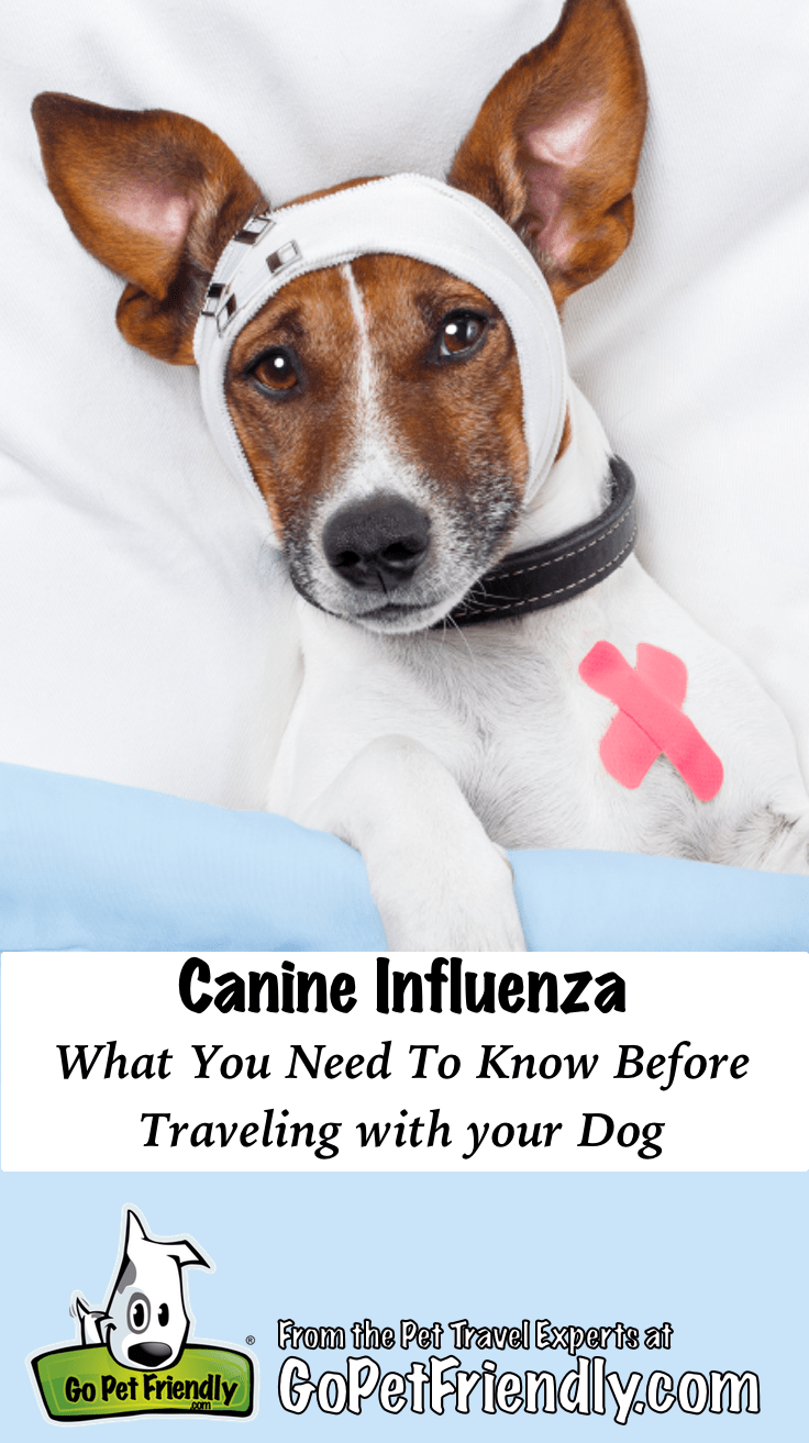 Dog flu: What you need to know before traveling with your dog GoPetFriendly.com