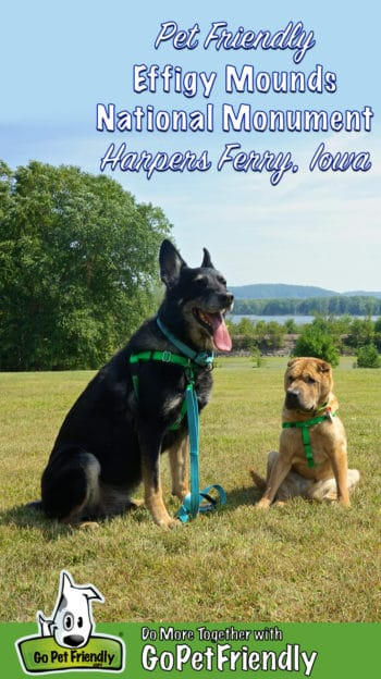 German Shepherd and Shar Pei dogs pose as a pet at the Effigy Mounds National Monument in Harpers Ferry, IA