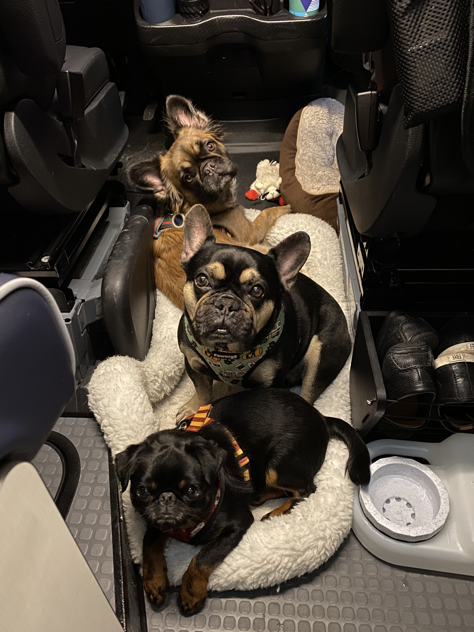 dogs traveling safely in rv