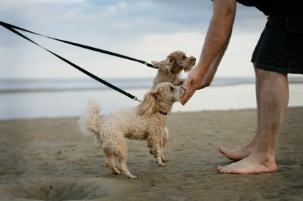 One greets dogs