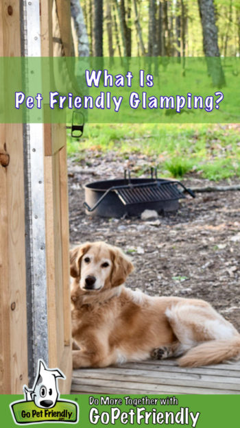 Golden Retriever on the porch for a glamping trip, suitable for pets