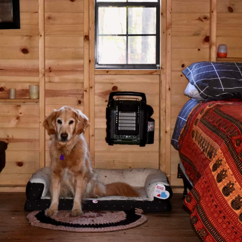 Glamping hut suitable for pets