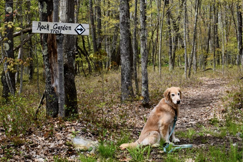 Hiking in a place for glamping, suitable for pets - Wild Yough