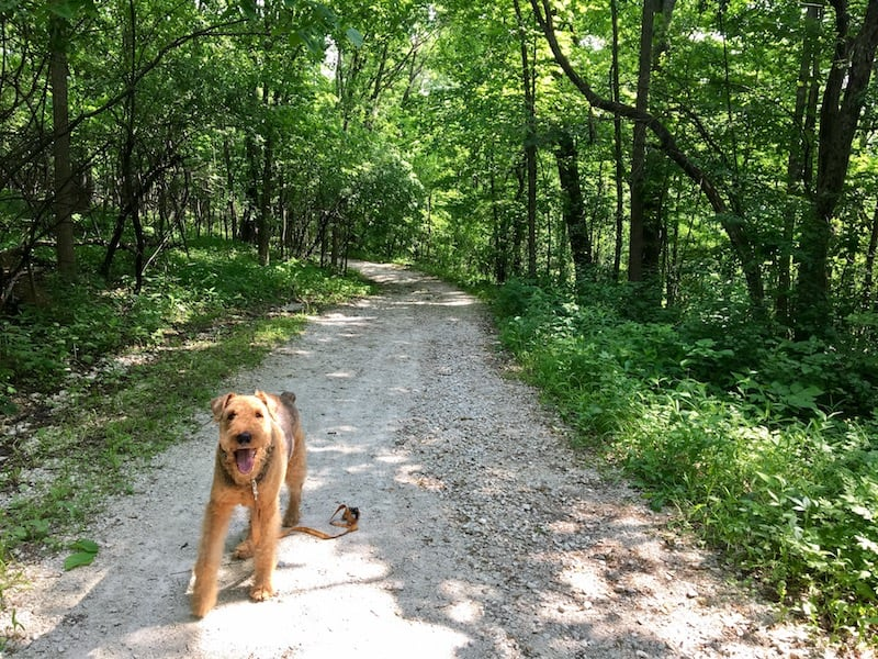 Suitable for dog hiking near Chicago GoPetFriendly.com