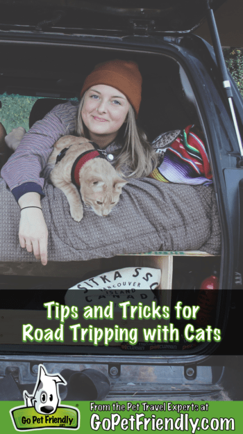 Tips and tricks for traveling with cats  GoPetFriendly.com