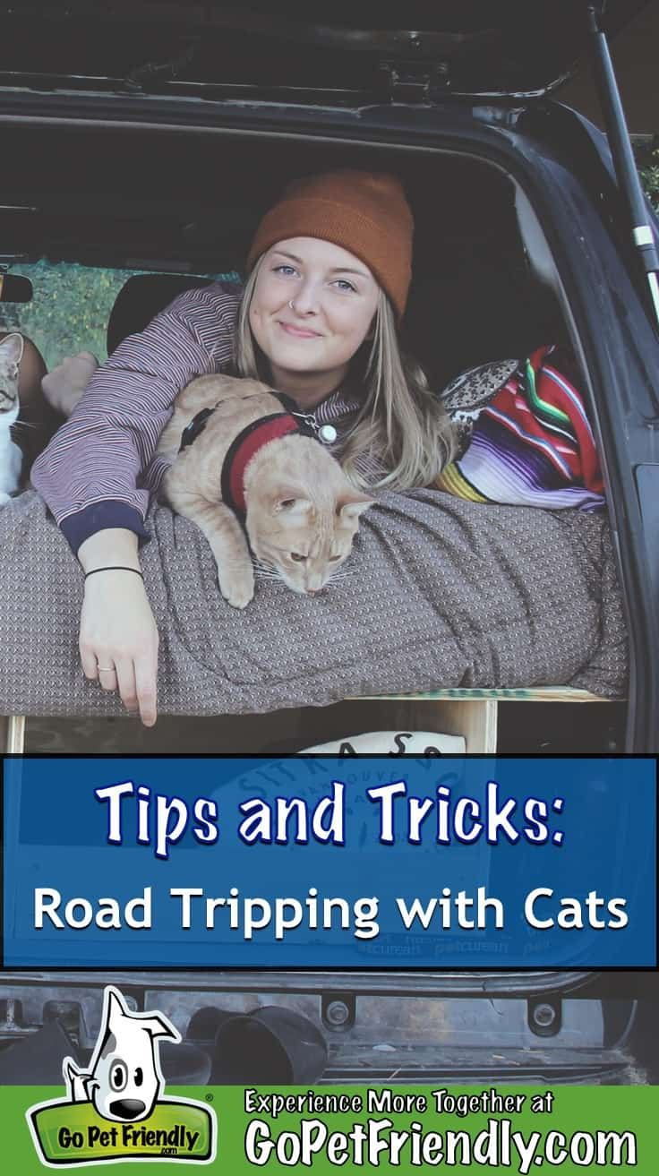 Woman and cat on a bed in the back of a vehicle