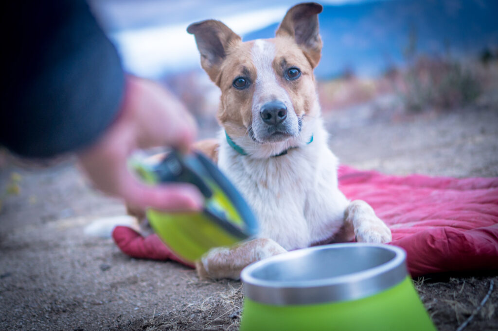 Measuring your food with a measuring cup, such as that from Dexas, along with exercise, can help prevent an overweight dog.